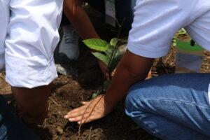 primera_dama_siembra_arbolitos_plantacion